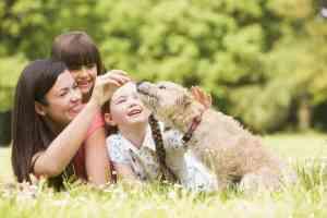 Ile żyją psy: co wpływa na długość życia i jak się liczy wiek psa?