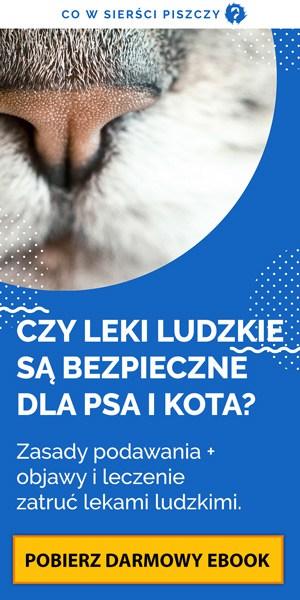 Czy leki ludzkie są bezpieczne dla psa i kota?