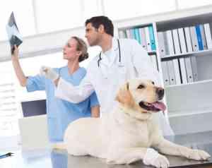RTG u psa i kota: kiedy wykonać i ile kosztuje zdjęcie rentgenowskie?