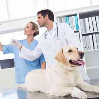 RTG u psa i kota
