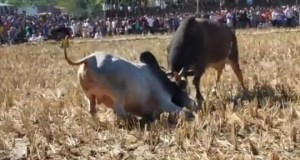 http://coxview.com/wp-content/uploads/2020/12/Sports-Bullfighting-2.jpg