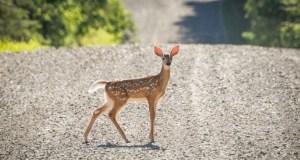 http://coxview.com/wp-content/uploads/2021/08/Animal-deer.jpg
