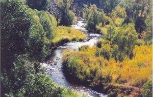 Bear Creek near Evergreen