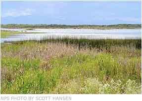 Blanca Wetlands via the National Park Service