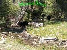 Mancos River in Montezuma County