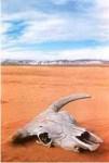 desertcowskull