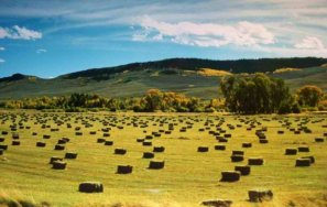 Hay meadows near Gunnison
