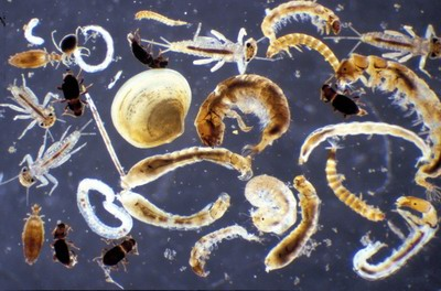 Macro Invertebrates via Little Pend Oreille Wildlife Refuge Water Quality Research