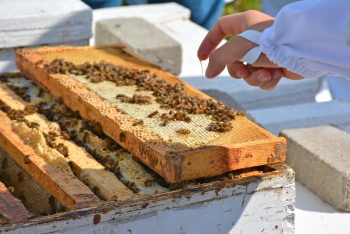 Honeybees are important pollinators, an ecosystem service that is not always adequately accounted for in traditional markets. Image credit: Marisa Lubeck, USGS.