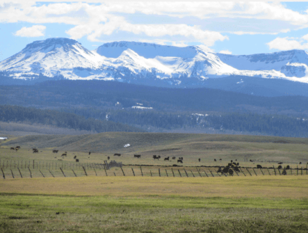 Meadows were greening up in Colorado's Egeria Park by early May [2017] even as snow held on in the Flat Tops. Photo/Allen Best