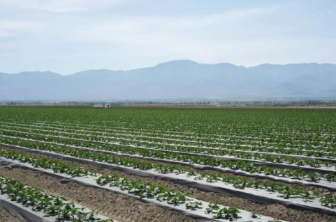 Coachella Valley photo credit the Water Education Foundation.