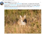 coyoteonhuntrmnpupperbeavermeadows2017tonystakes