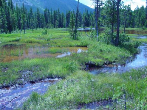 "Photo credit from report ""A Preliminary Evaluation of Seasonal Water Levels Necessary to Sustain Mount Emmons Fen: Grand Mesa, Uncompahgre and Gunnison National Forests,"" David J. Cooper, Ph.D, December 2003."