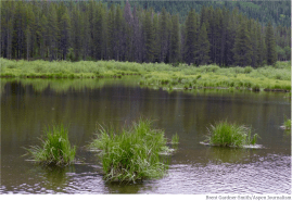 A wetland area along Homestake Creek in an area that would be flooded by a potential Whitney Reservoir. The cities of Aurora and Colorado Springs are looking to develop additional water in Eagle County and divert it to the Front Range. Photo credit: Brent Gardner-Smith/Aspen Journalism