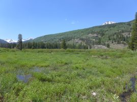 These wetlands in the Homestake Creek valley are near the site of the proposed Whitney Reservoir. The Forest Service is considering whether to issue a permit for drilling and a geotechnical study to test whether the site would support a dam. Photo credit: Heather Sackett/Aspen Journalism
