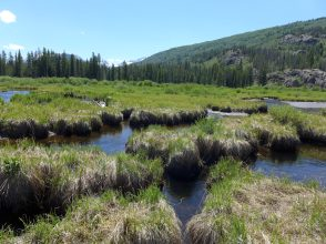 These wetlands, located on a 150-acre parcel in the Homestake Creek valley that Homestake Partners bought in 2018, would be inundated if Whitney Reservoir is constructed. The Forest Service received more than 500 comments, the majority in opposition to, test drilling associated with the project and the reservoir project itself. Photo credit: Heather Sackett/Aspen Journalism