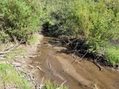 Wheeler Creek above Wheeler Ditch June, 2021. Photo credit: Scott Hummer