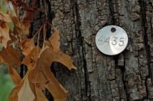 Tagged Tree