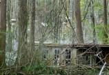Old house by the heronry