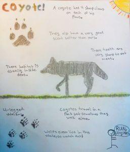 Journal coyote