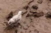 Wycieki ropy - śmierć setek zwierząt