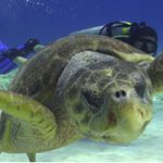 Cozumel My Cozumel Salty Endeavors Dive Shop Turtle