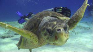 Salty Endeavors Dive Shop Turtle