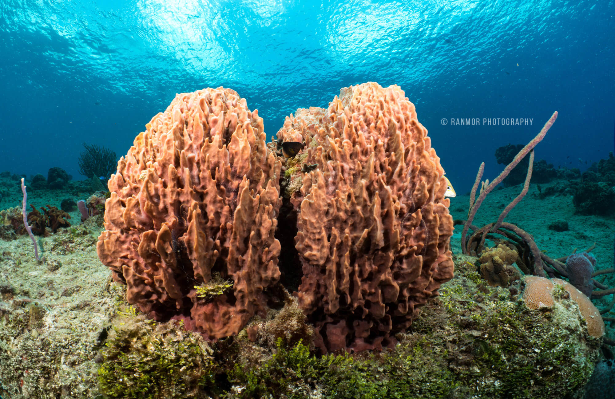 Cozumel My Cozumel Cozumel Underwater Photography School Discount