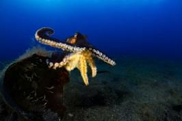 Bucket List Diving