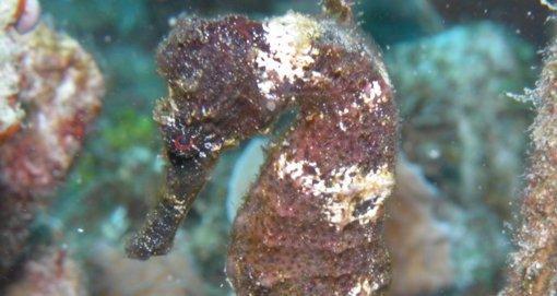 Cozumel Scuba Diving