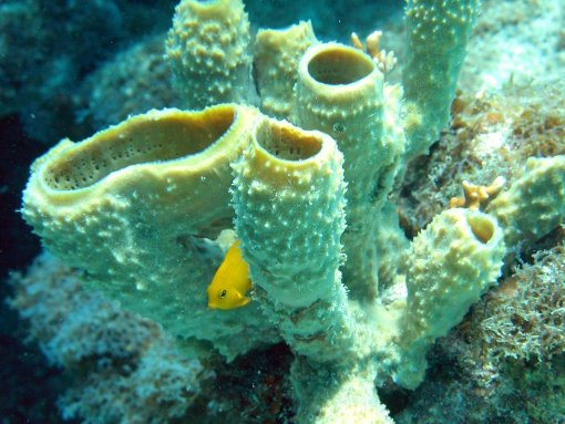 Best dive shops in Cozumel