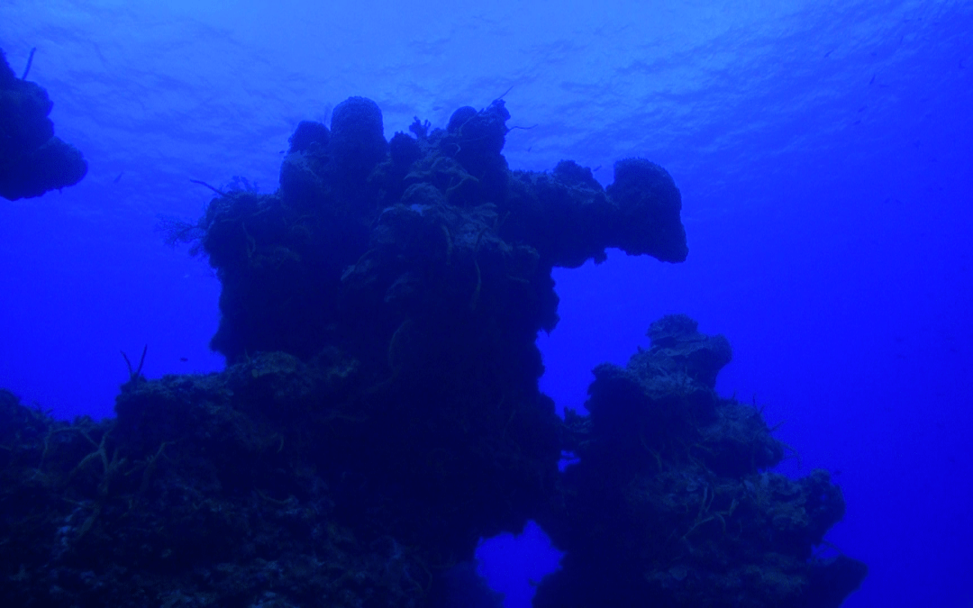 Palancar Reef – Epic Dives of Cozumel