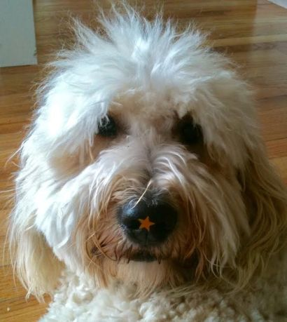 Our dog with a star stuck to her nose; Things that Make me Laugh article
