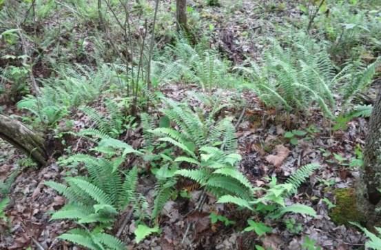 Cozy Hideaway Ferns
