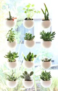 Small Space House Plant Display Ideas  Cozy Little House