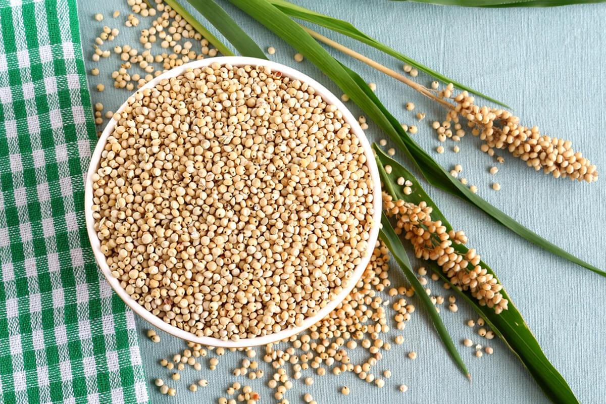для сорго зерновое фото очарован