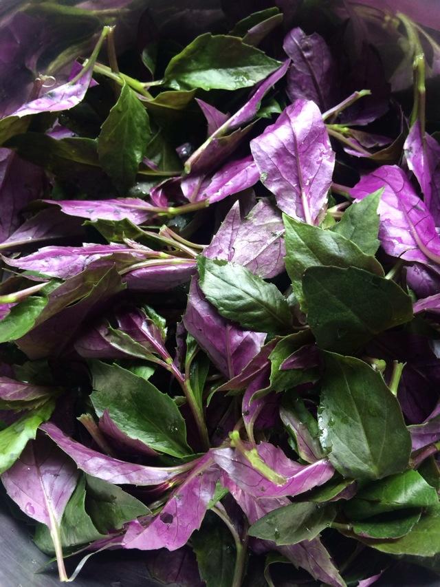 涼拌紫背天葵怎么做_涼拌紫背天葵的做法_豆果美食
