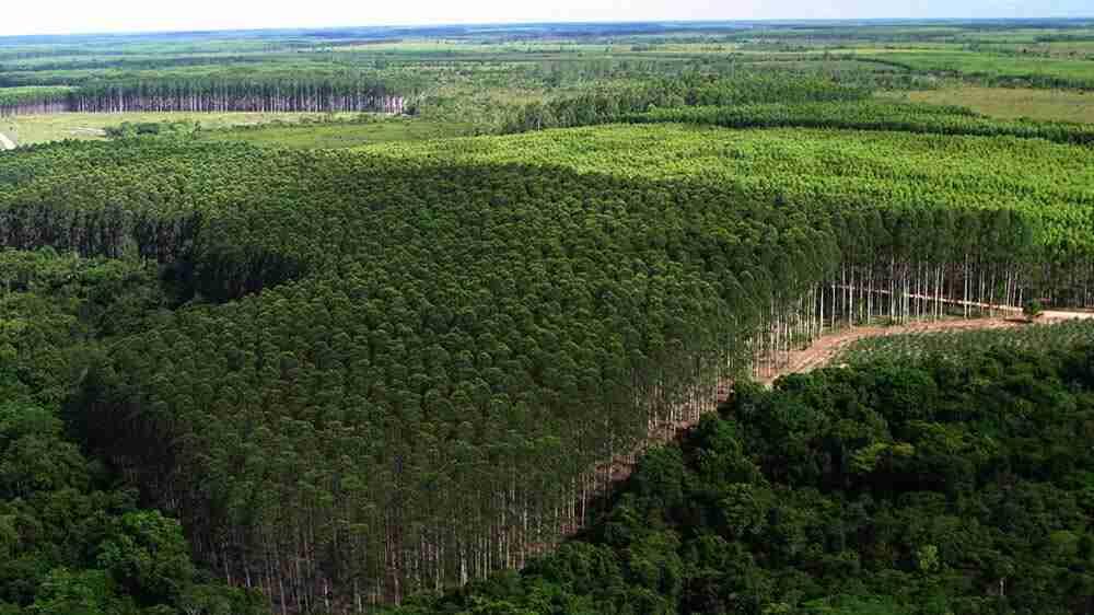 O que são as áreas de preservação permanente e reservas legais