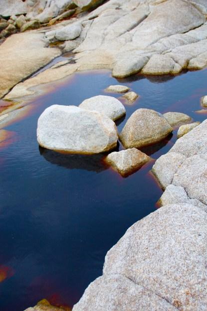 """Rock tea,"" Cape Breton Island, NS"