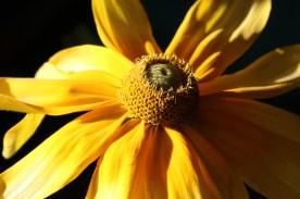 Flower, Gorham, NH