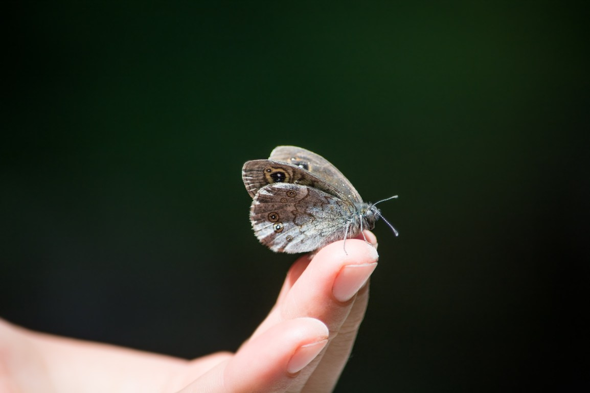Butterfly on finger