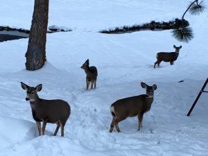 the-deer-welcomed-me-home
