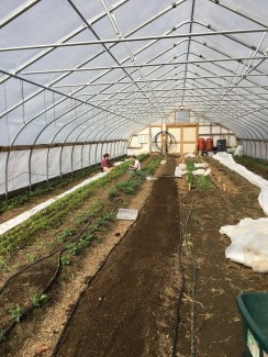 Our hoop house work day