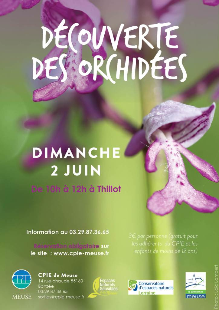 decouverte_orchidees