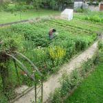 cueillette des doryphores (2)