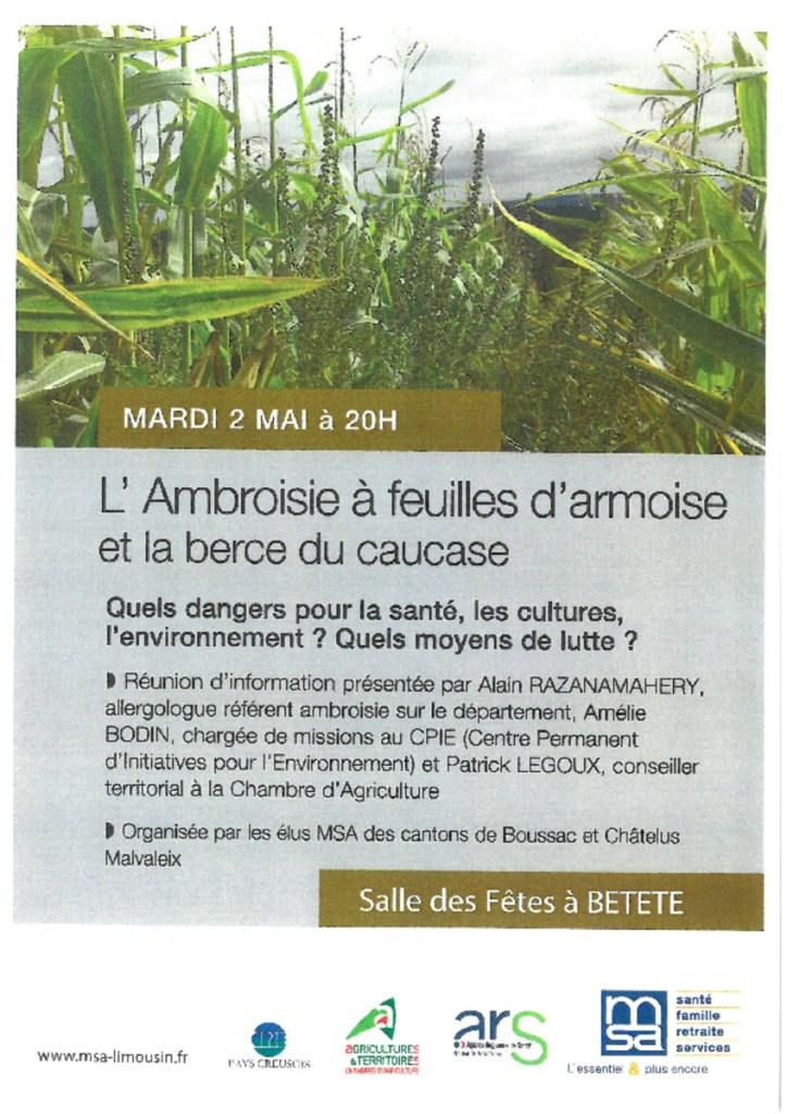 thumbnail of ambroisie Bétête