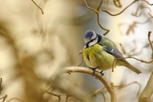 20190814 - A la découverte des oiseaux