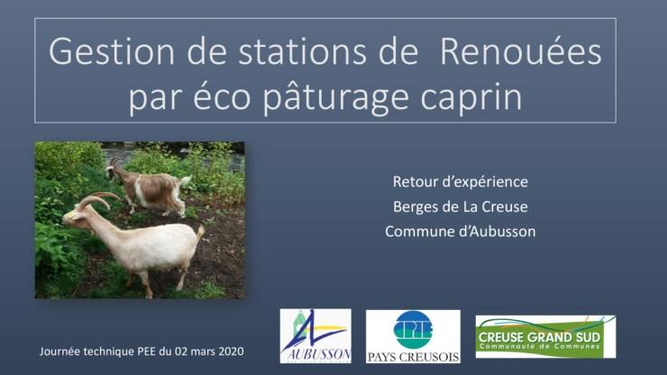 Gestion de stations de Renouées par éco pâturage caprin