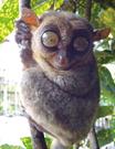 セブ島で会える動物