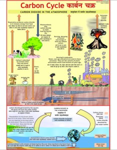 Carbon cycle chart also environment charts exporter manufacturer distributor  supplier rh vcpmaps